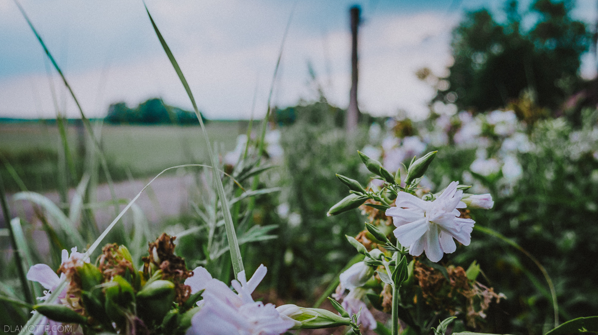 kwiaty przy polnej drodze spacer
