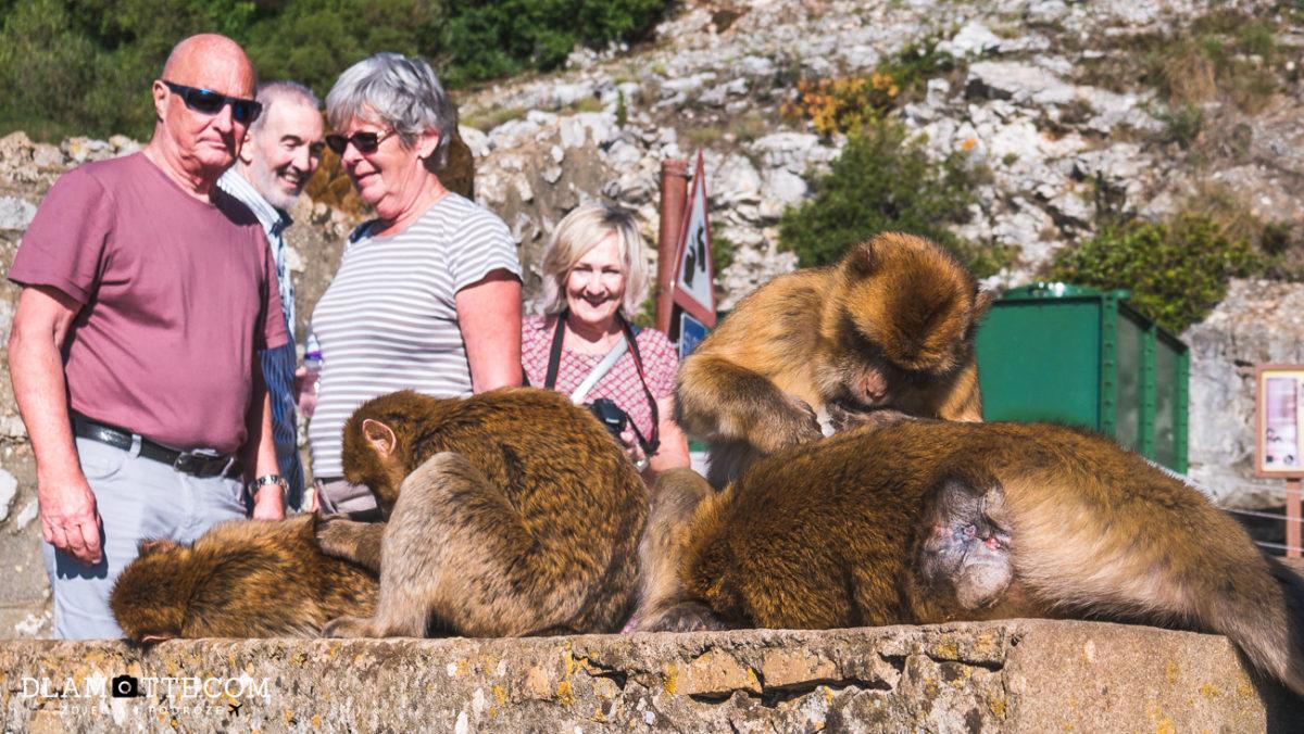 makaki gibraltarskie