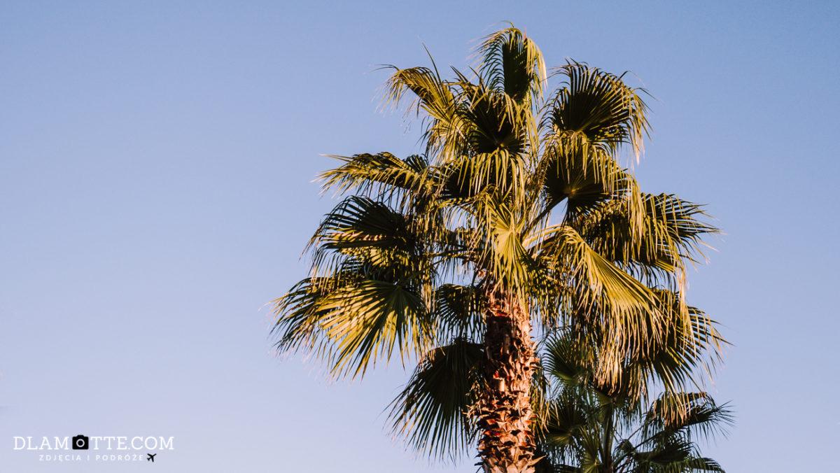 palma Malaga roadtrip po Andaluzji