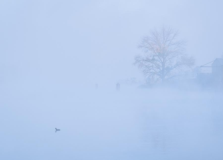 Szczecin mgła