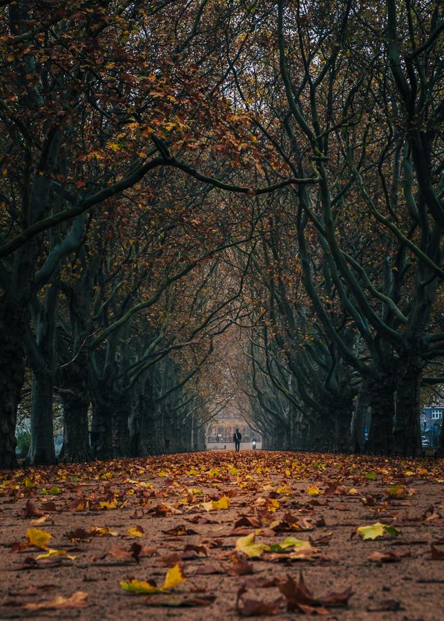 Jasne Błonia jesień Szczecin